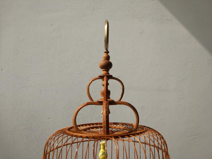 long chim khuyen
